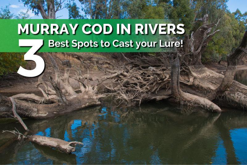 Murray Cod in Rivers – 3 Best Spots to Cast your Lure!